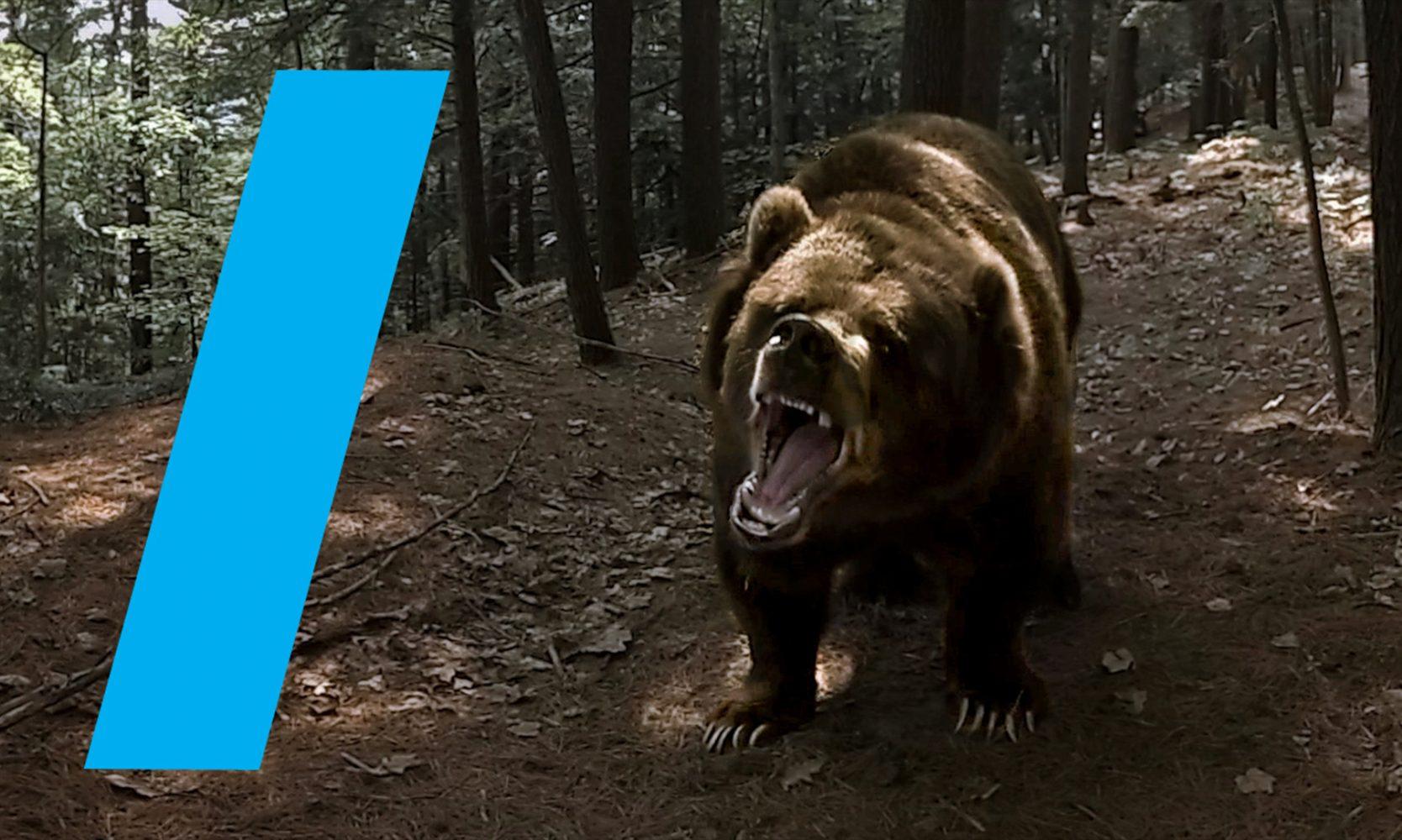 WildWith bear